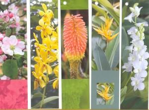 набор цветы 1-5