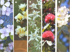 набор цветы 11-15