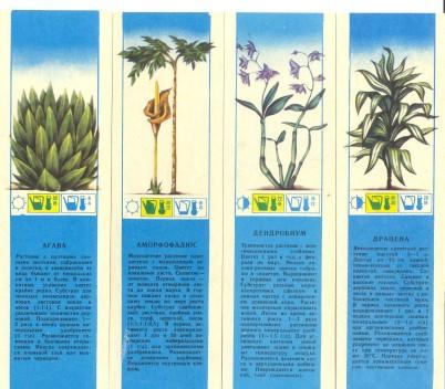 CCCР-Комнатные растения-1-4