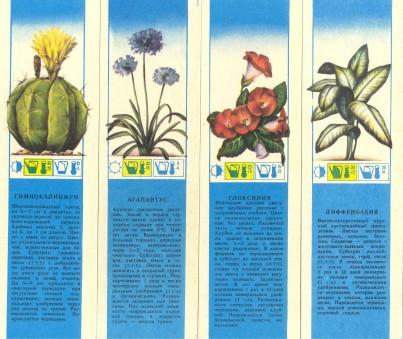 CCCР-Комнатные растения 5-8