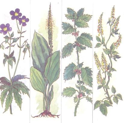 CCCР- лекарственные растения 2