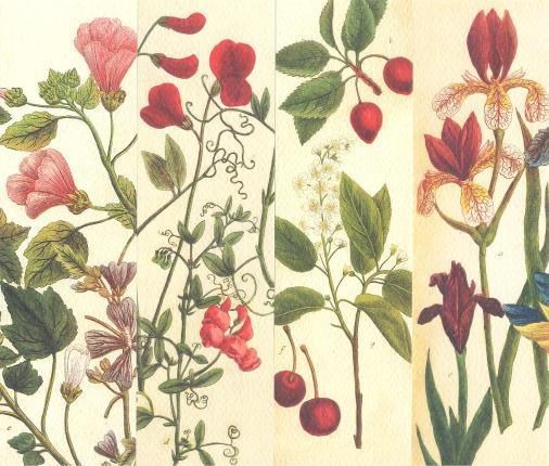 Царицыно-язык цветов 1,2,3,4