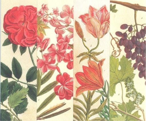 Царицыно-язык цветов 5,6,7,8