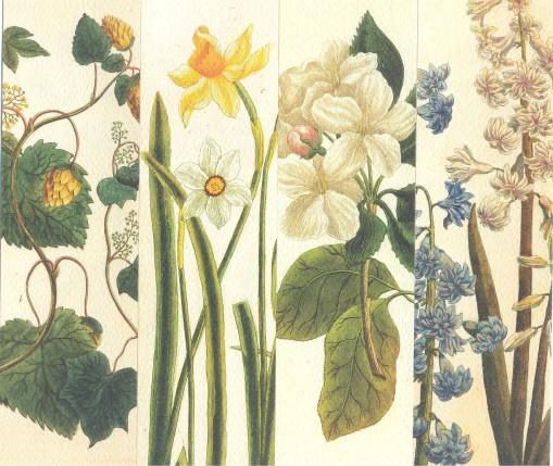 Царицыно-язык цветов 9,10,11,12